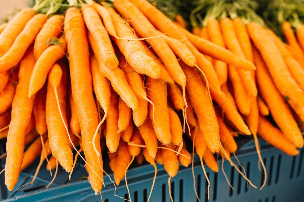 Karotten-Sorten Adelaide