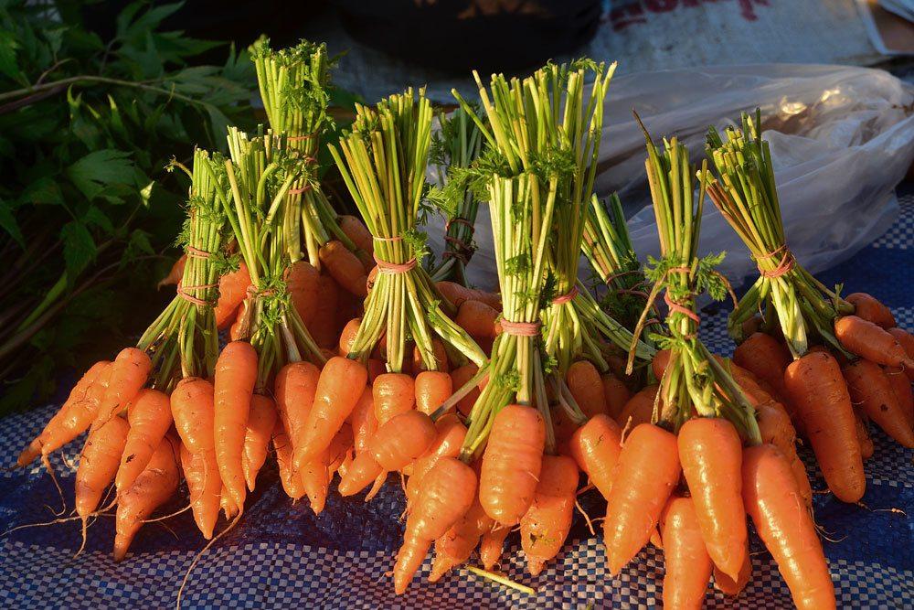 Karottensorten, Duwicker Streit