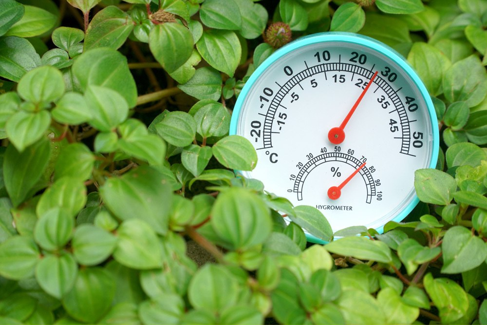 Pflanzenthermometer