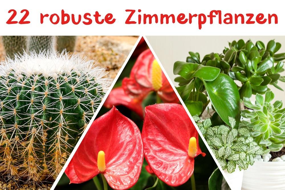 robuste Zimmerpflanzen