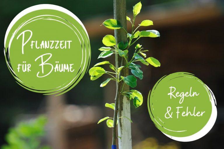 Pflanzzeit für Bäume