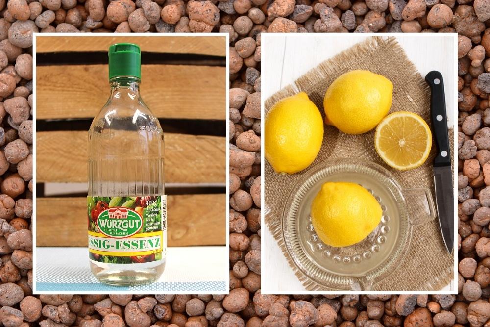 Essig und Zitrone gegen Schimmel