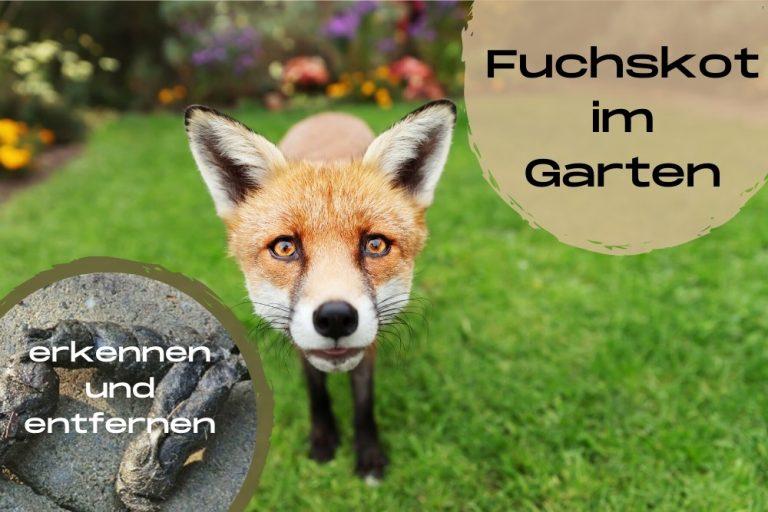 Fuchskot im Garten
