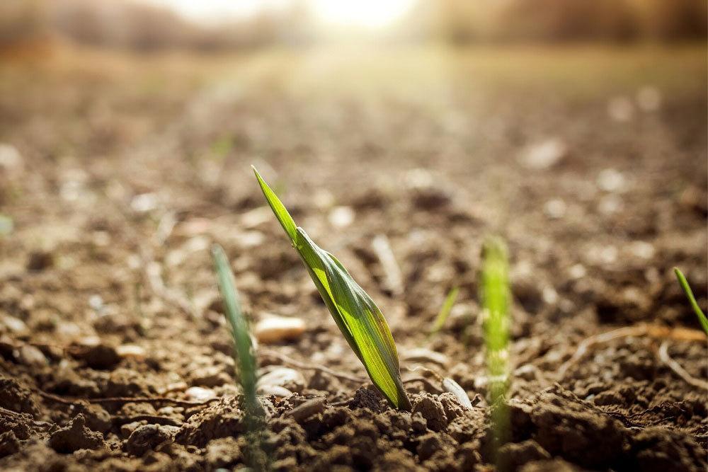 Rasen Keimung