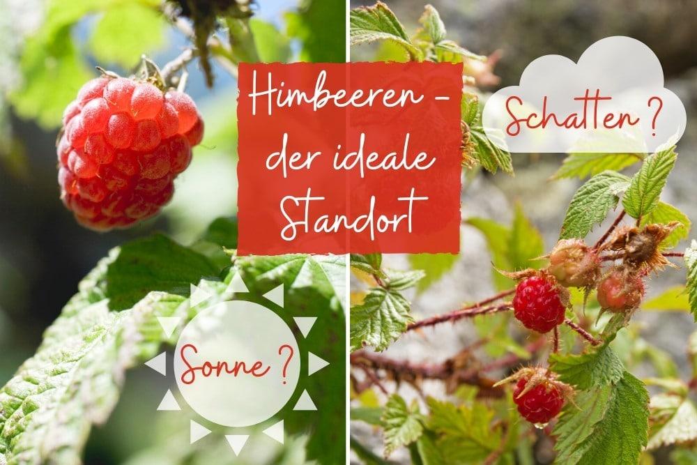 Himbeeren: Sonne/Schatten