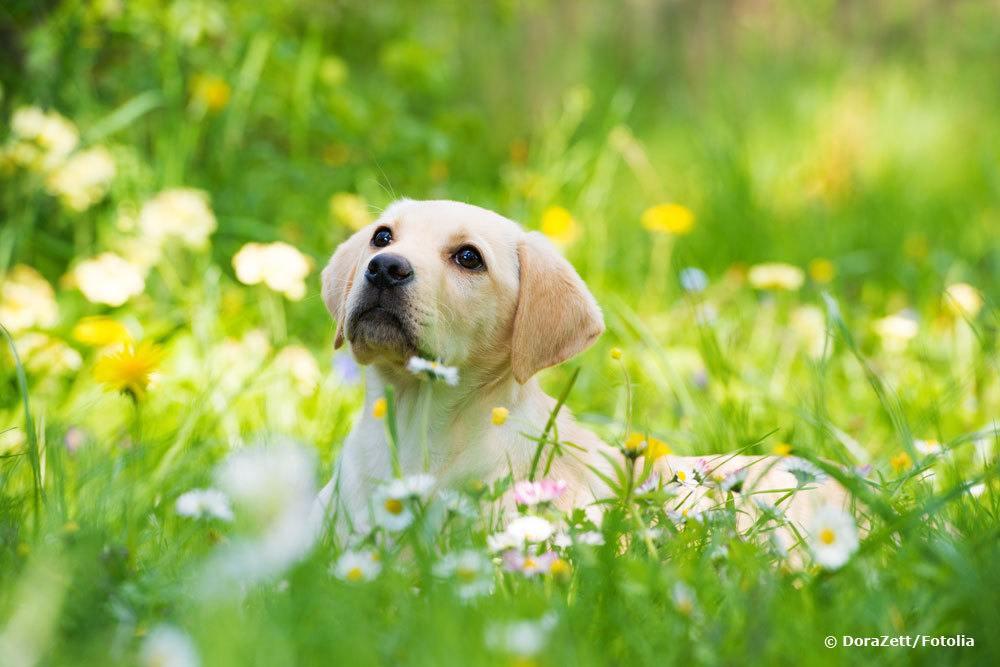 Hundeurin im Rasen