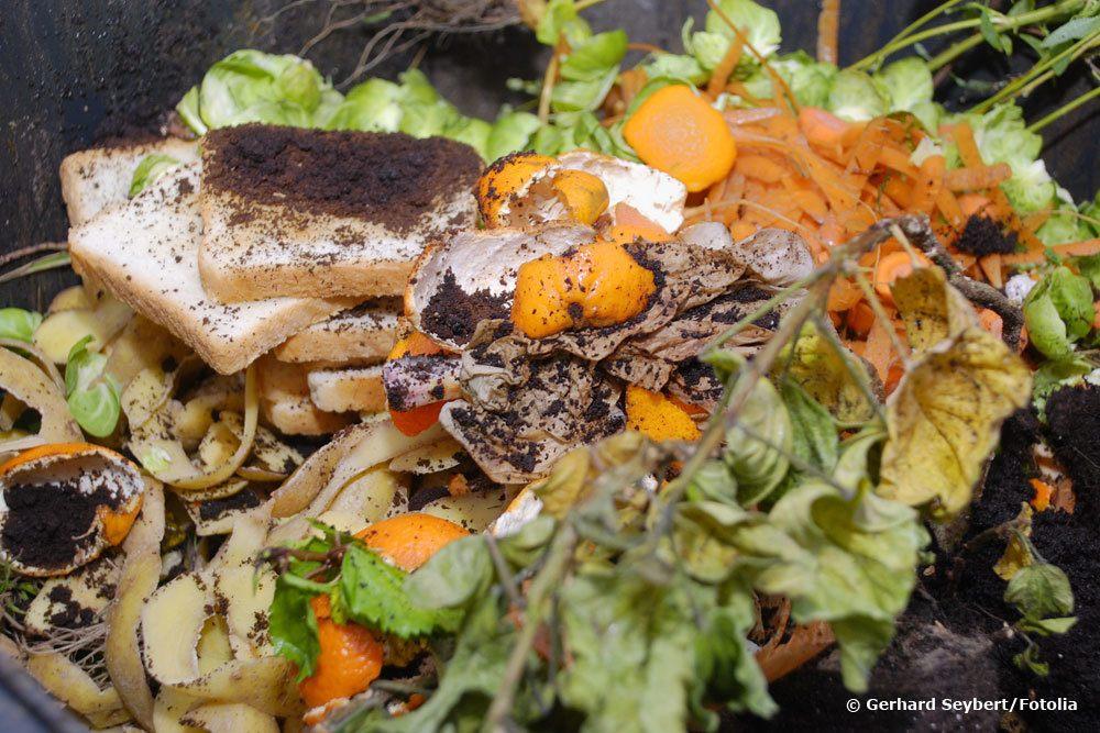 Ratten im Kompost