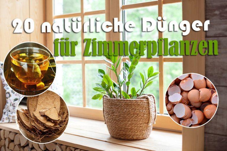Natürliche Dünger für Zimmerpflanzen
