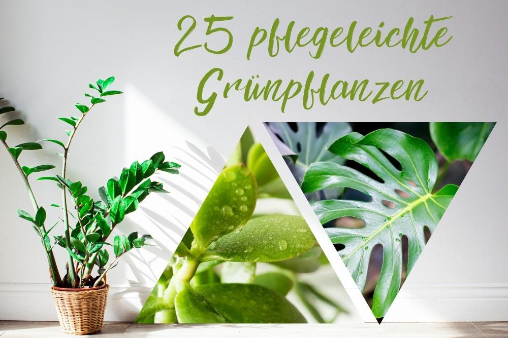 pflegeleichte Grünpflanzen