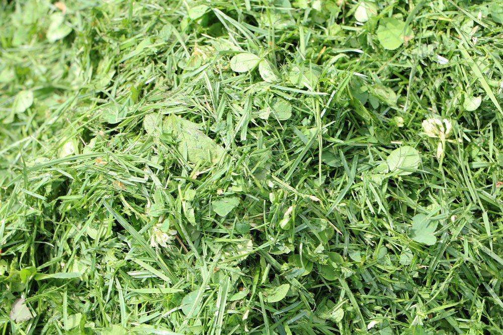 Rasenschnitt, Grünschnitt