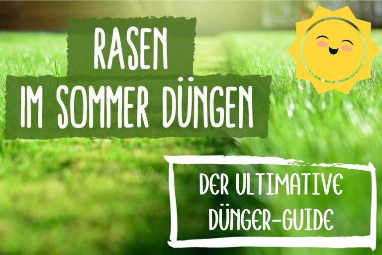 Rasen Sommer düngen