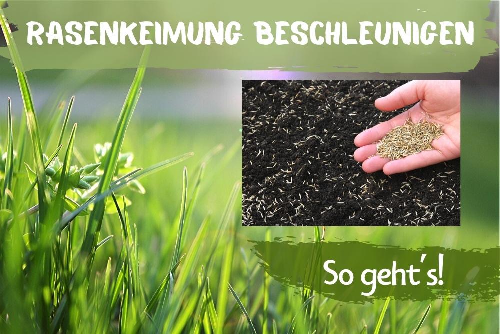 Rasen Keimung beschleunigen