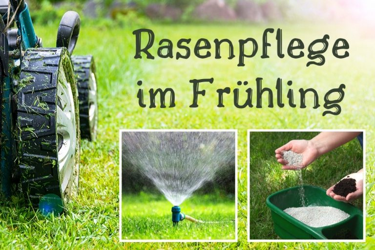 Rasenpflege im Frühling
