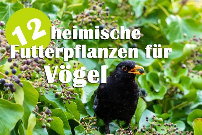 12 heimische Futterpflanzen für Vögel