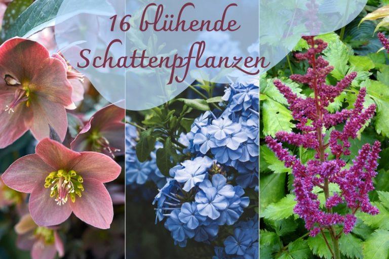 blühende Schattenpflanzen