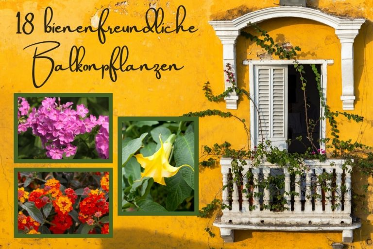 bienenfreundliche Balkonpflanzen - Titel