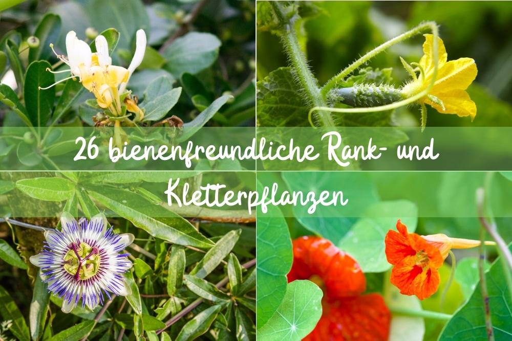Rank- und Kletterpflanzen - Titel