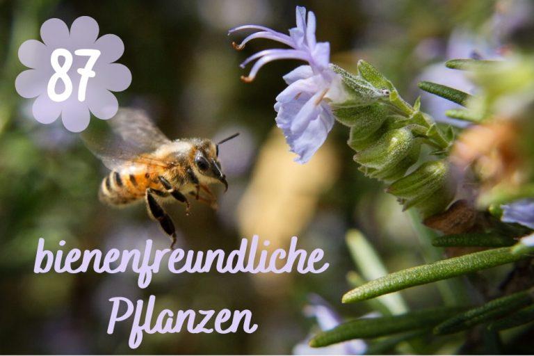bienenfreundliche Pflanzen -Titel