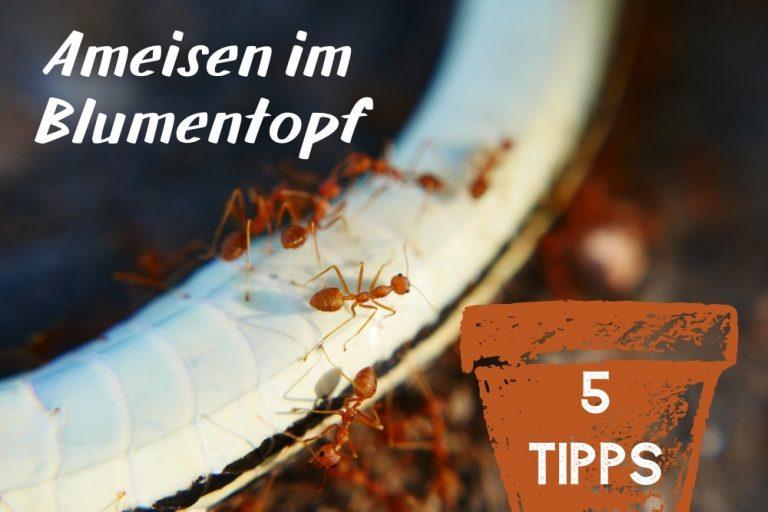 Ameisen im Blumentopf - Titel