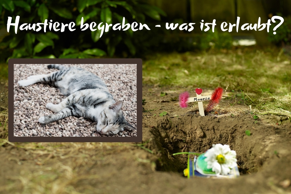 Haustiere begraben Titel