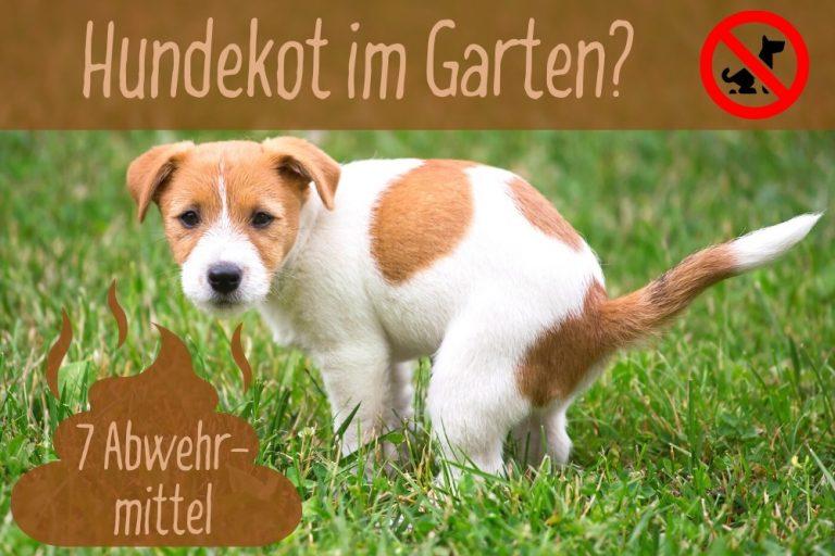 Hundekot im Garten - Abwehrmittel