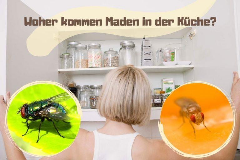 Fliegen Maden in der Küche