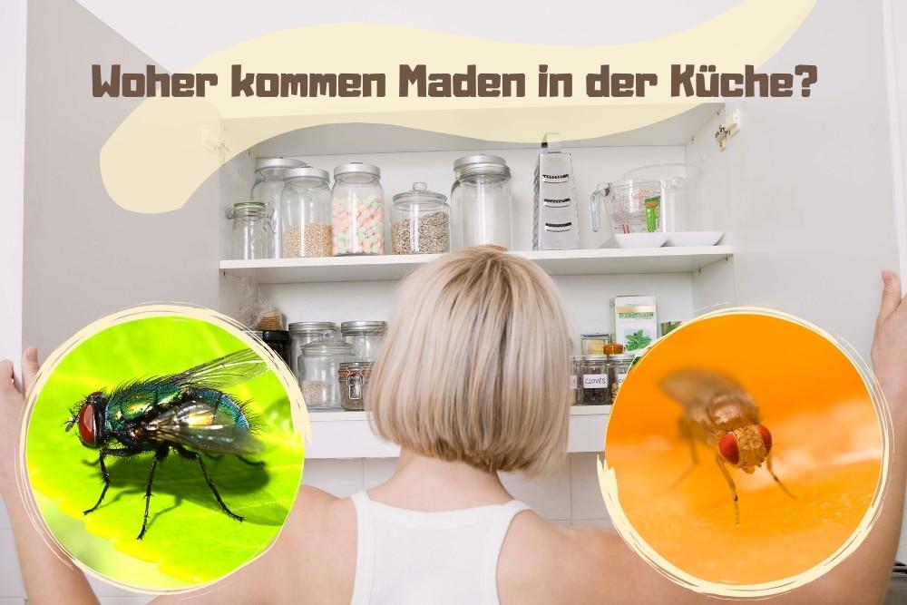 Ehrfürchtig Woher Kommen Ameisen In Der Küche