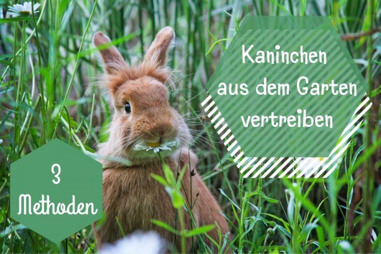 Kaninchen vertreiben