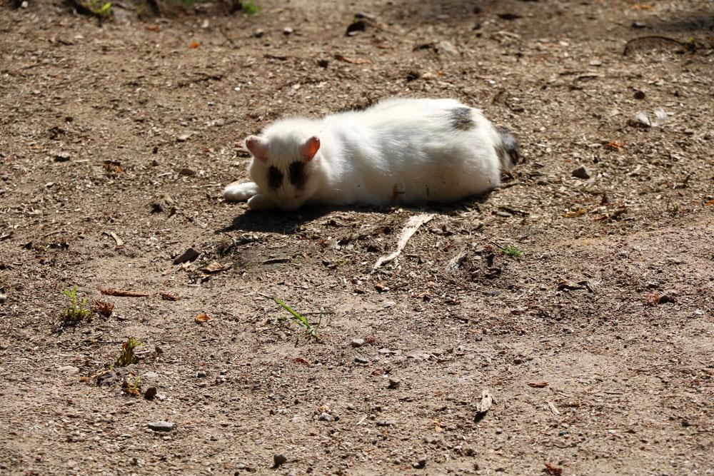 Haustiere begraben