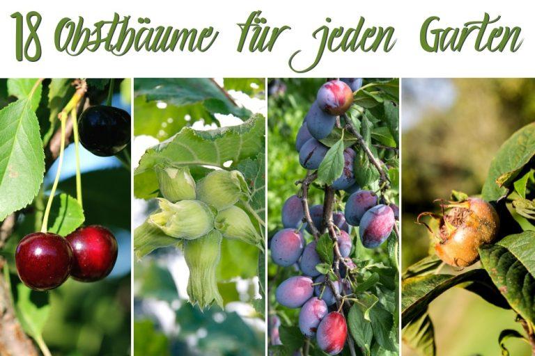 Obstbäume für jeden Garten