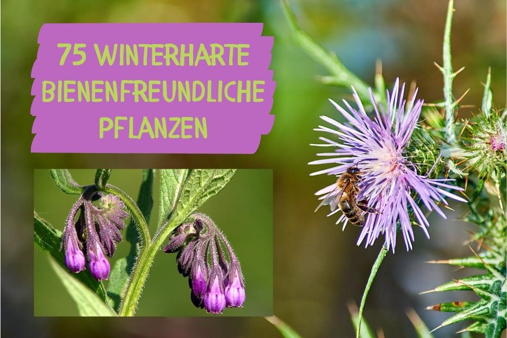 bienenfreundliche winterharte Pflanzen