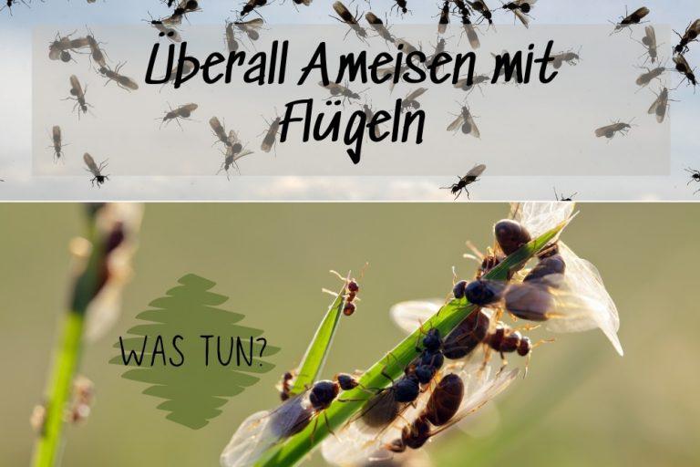 Ameisen mit Flügeln - Titel