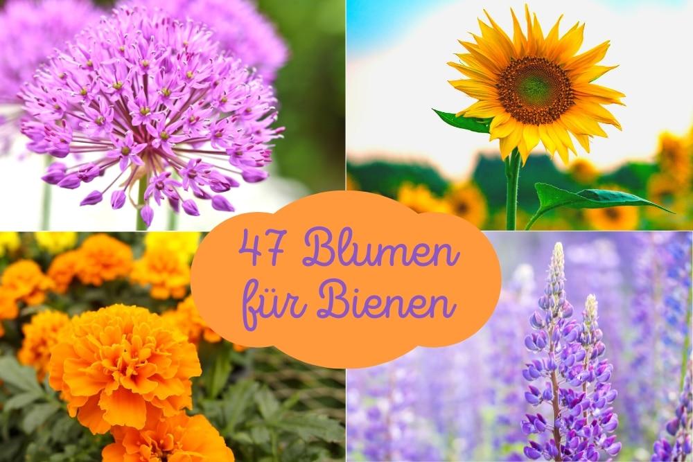 Blumen für Bienen - Titel