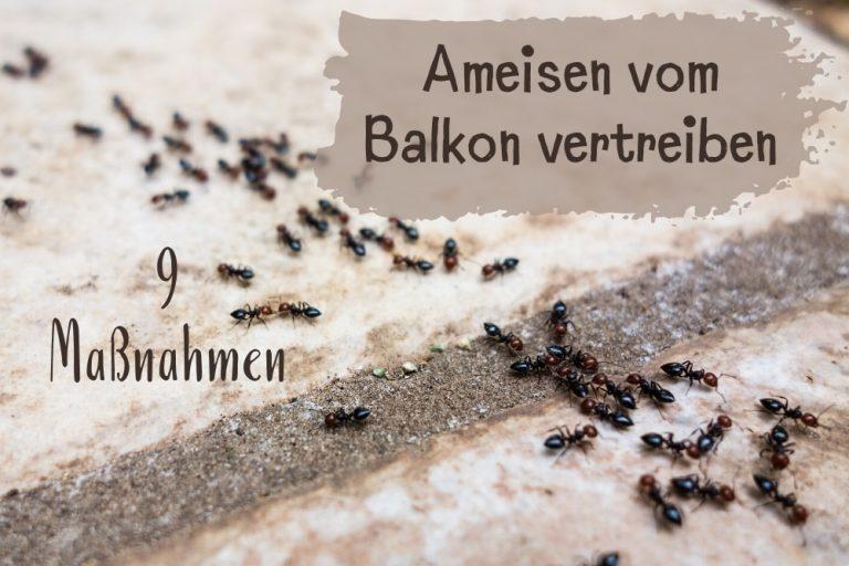 Ameisen auf dem Balkon - Titel