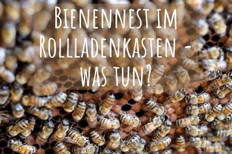 Bienen im Rollladenkasten - Titel