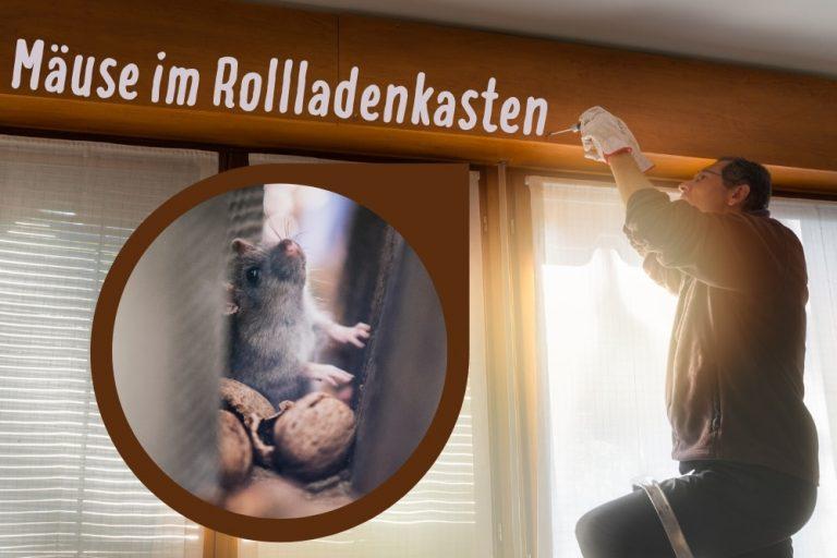 Mäuse im Rollladenkasten