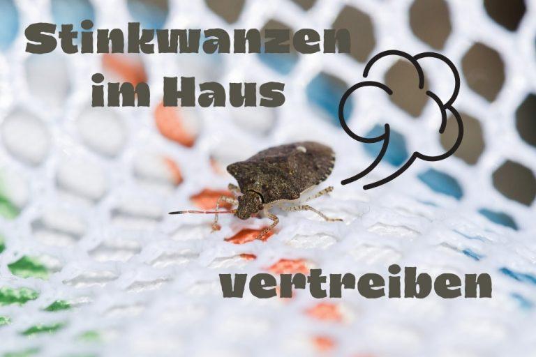 Stinkwanzen vertreiben - Titel