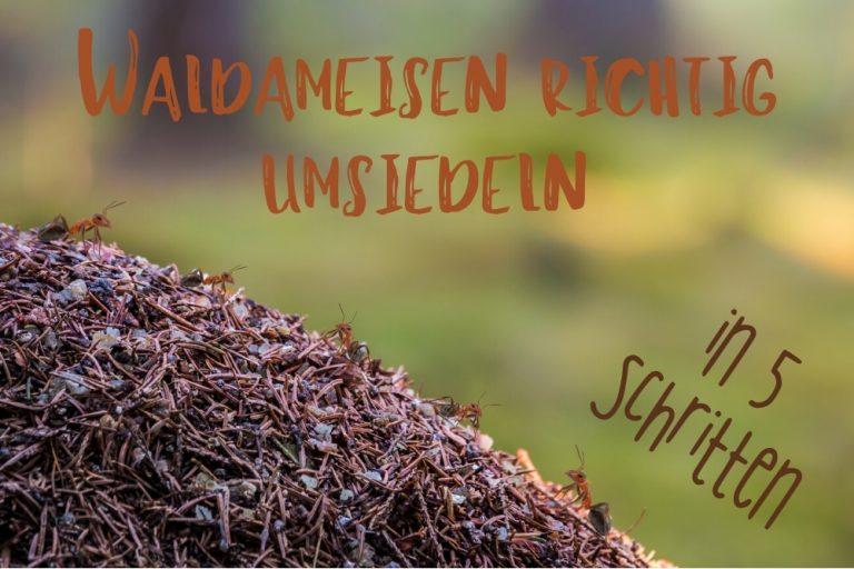 Waldameisen umsiedeln - Titel