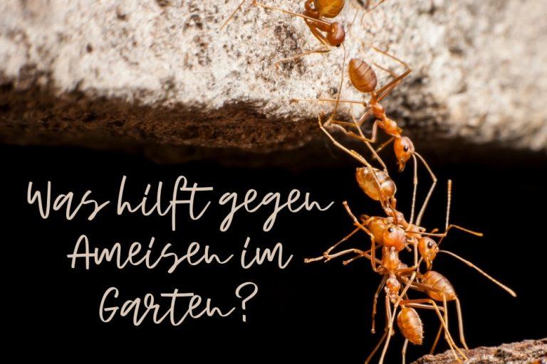 Ameisen im Garten- Titel