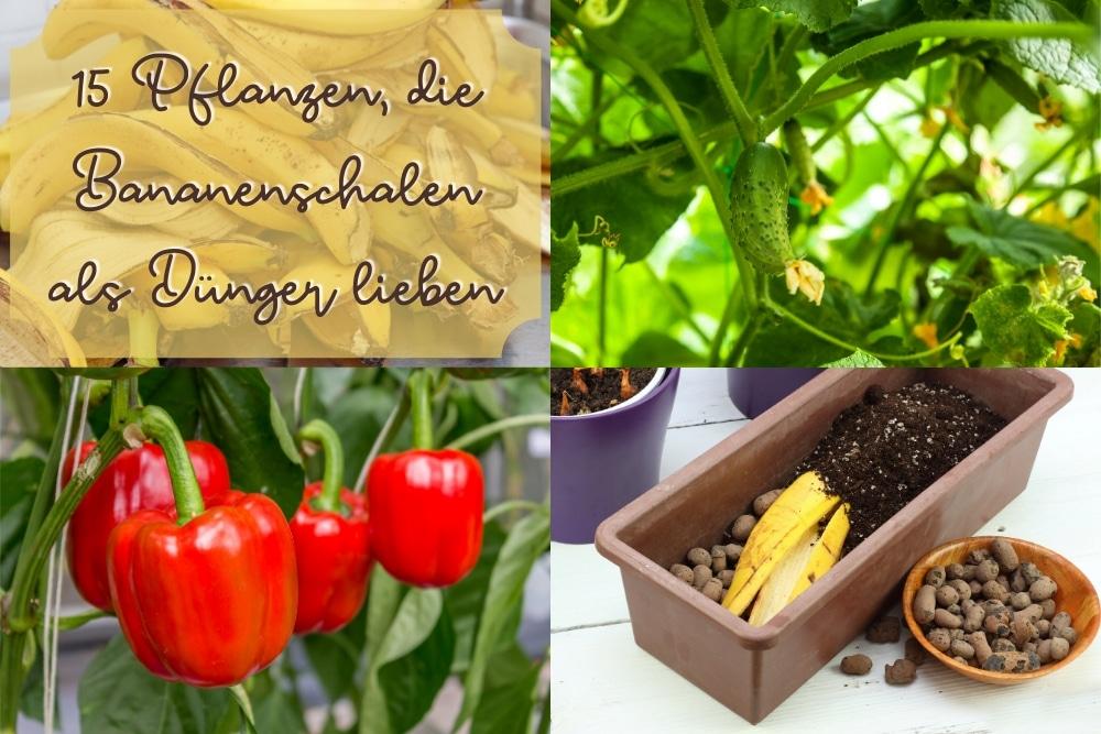 Bananenschalen als Dünger -Titel