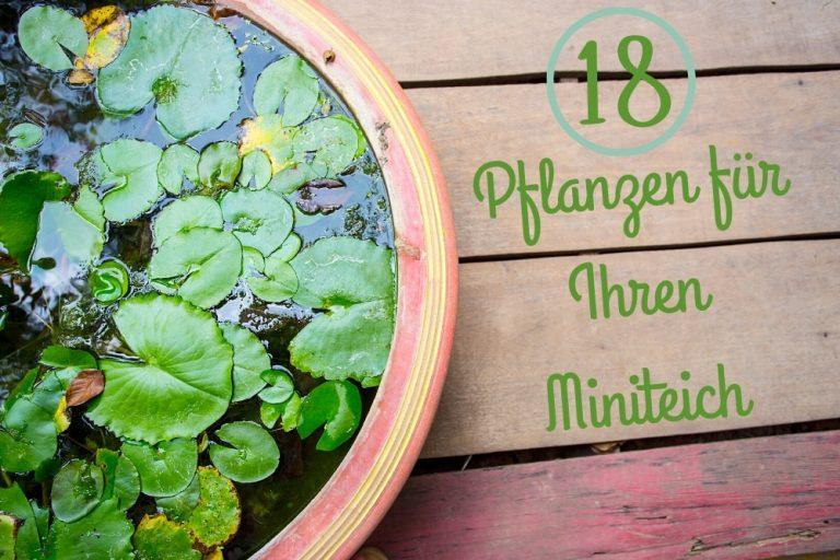 Pflanzen für den Miniteich - Titel