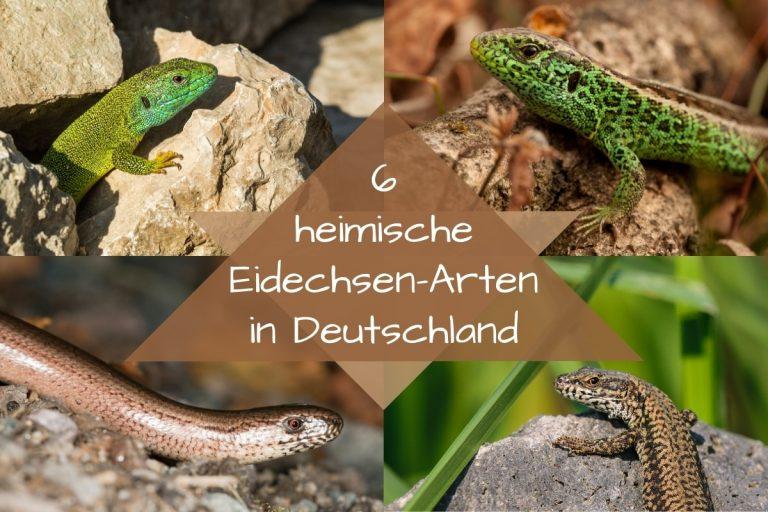 Eidechsen-Arten -Titel