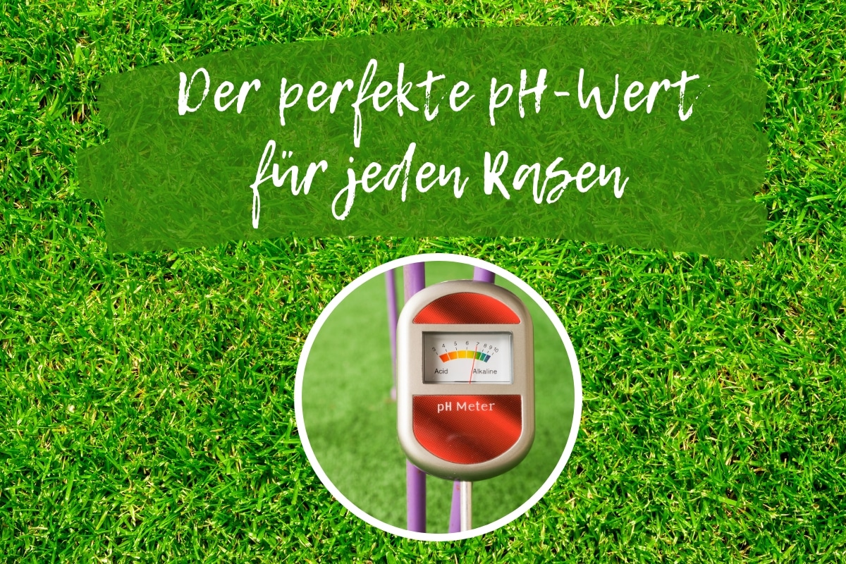 pH-Wert Rasen - Titel