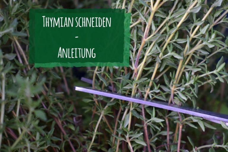 Thymian schneiden Anleitung - Titel