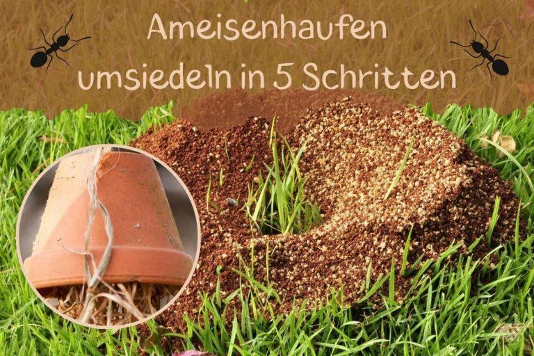 Ameisenhaufen umsiedeln - Titel