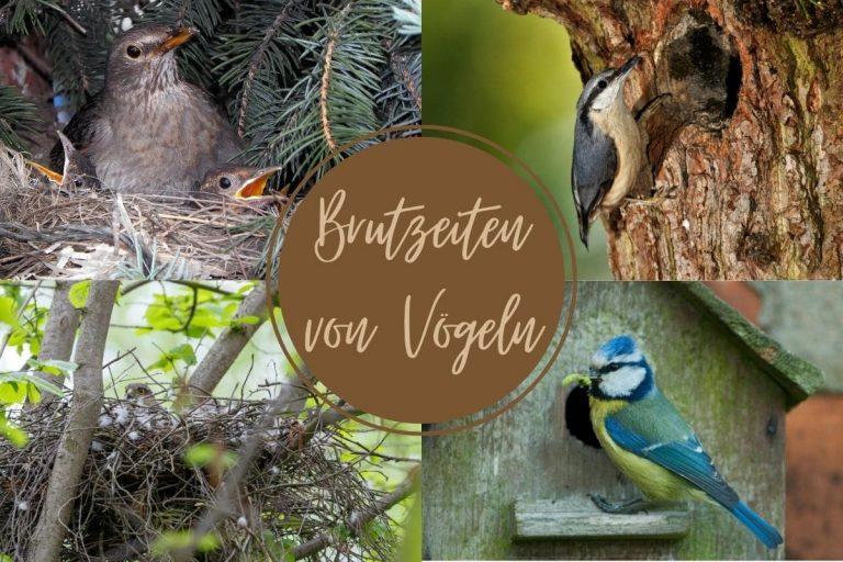 Brutzeit von Vögeln - Titel