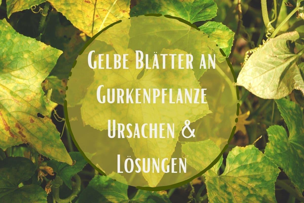 gelbe Blätter - Titel