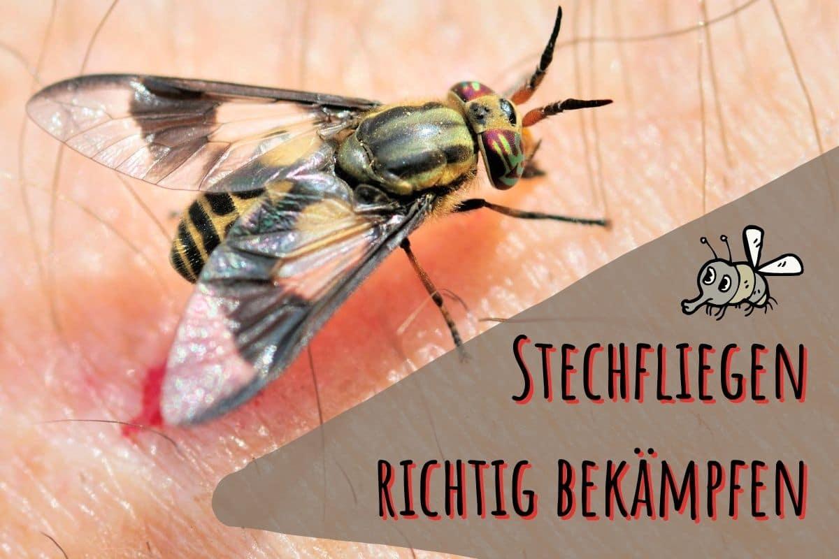 Stechfliegen bekämpfen - Titel