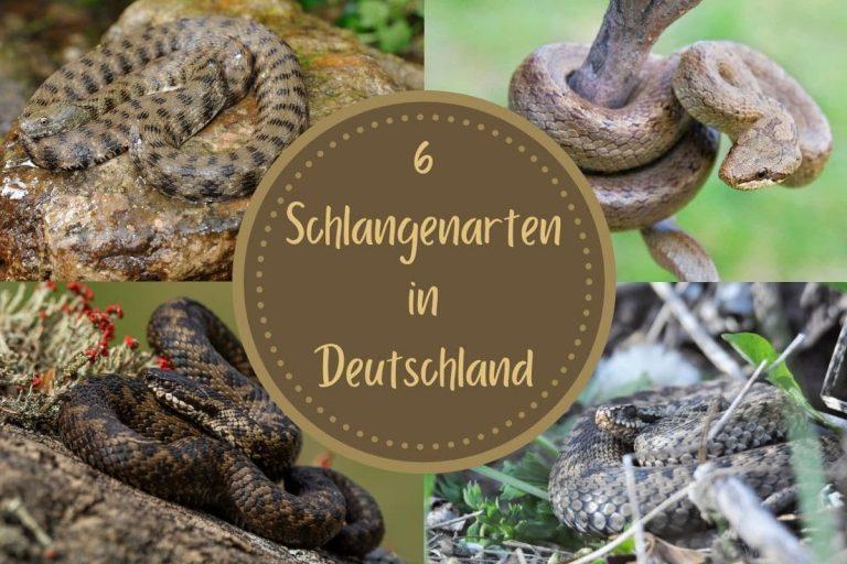 Schlangen in Deutschland - Titel