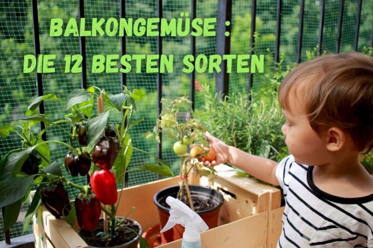 Balkongemüse - Titel
